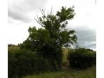 Somerset Phase II Habitat Survey